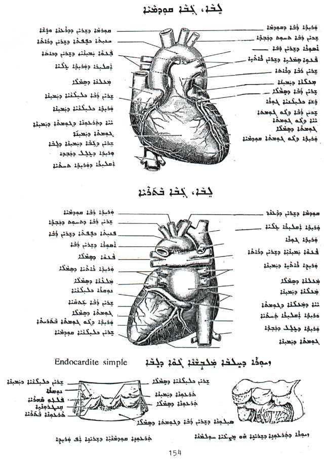 Gabriel Kenoun Medicine And Human Anatomy And Geometry Books